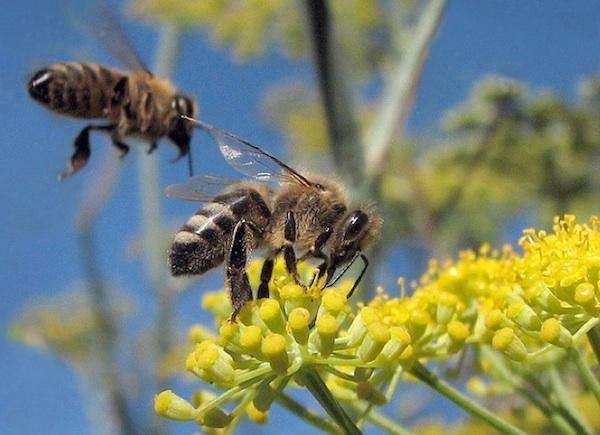 Пчелы тоже умные