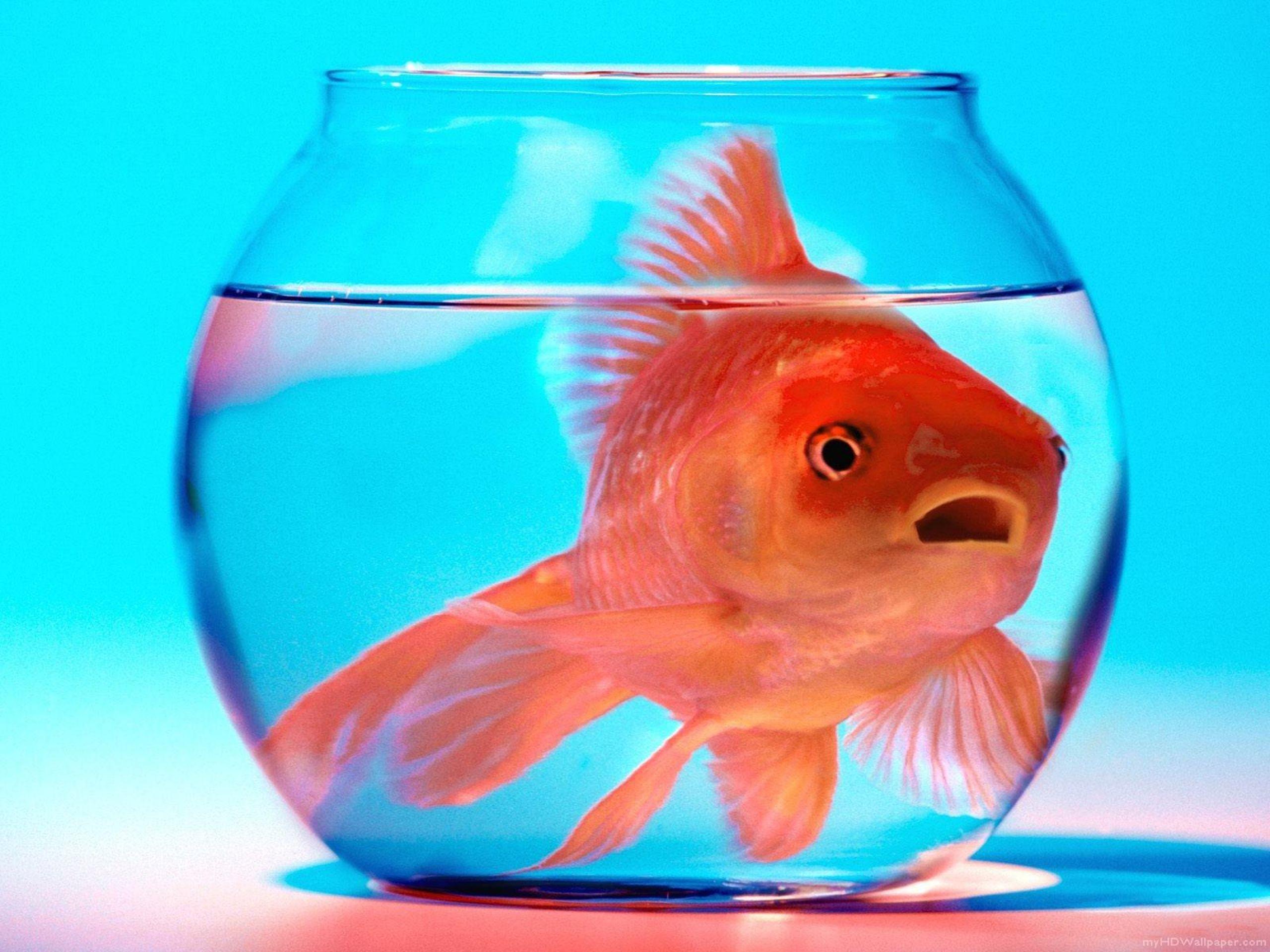 Золотые рыбки полетели в космос