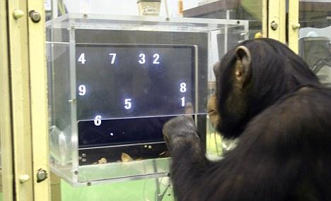 Шимпанзе может решать математические задачи