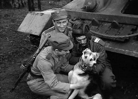 Советские собаки тоже воевали