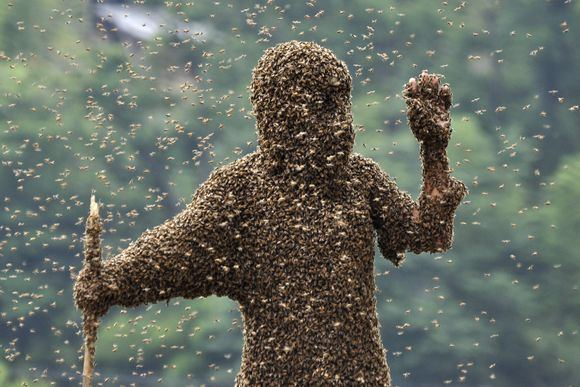 Бомбежка феромонами привлекала бы пчел