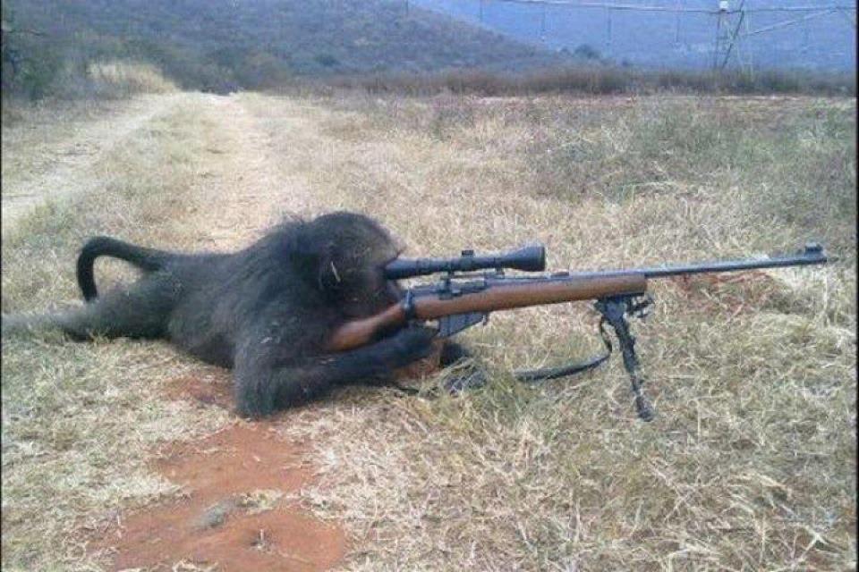 Армия обезьян должна была заменить людей