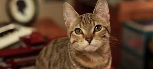Котенок-джедай