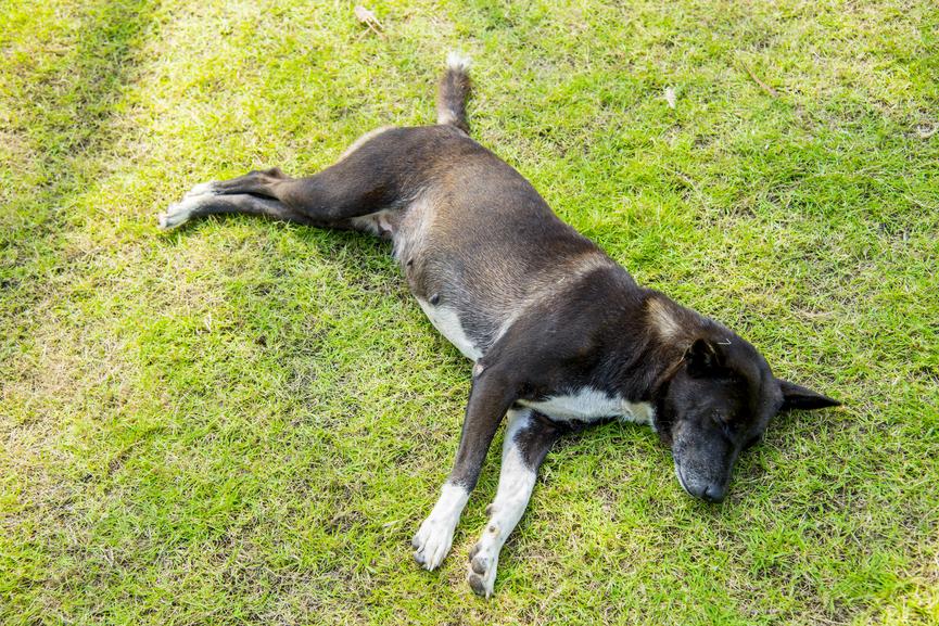 Собаки крутятся на месте из-за старой привычки