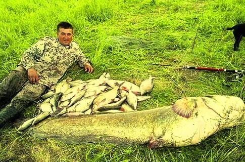 Это вовсе не рыбак-карлик: просто рыба очень уж большая