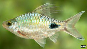 Рыба Ричарда Докинза