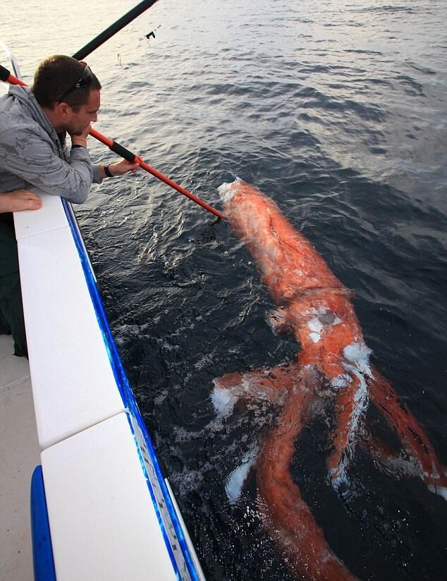 ловля кальмаров фото