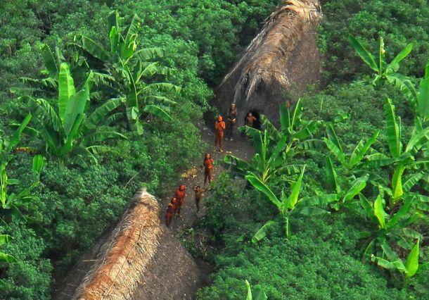 В Джавари живут бразильские племена, которые никогда не контактировали с цивилизацией