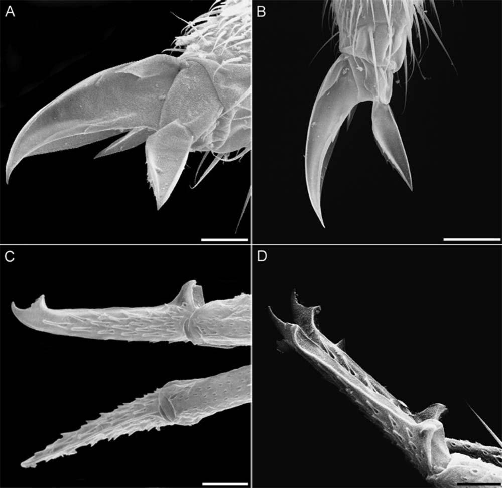 Щупальца под микроскопом