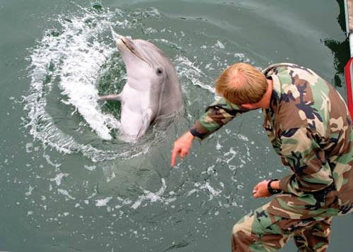 О дельфинах-убийцах в Министерстве обороны не знают