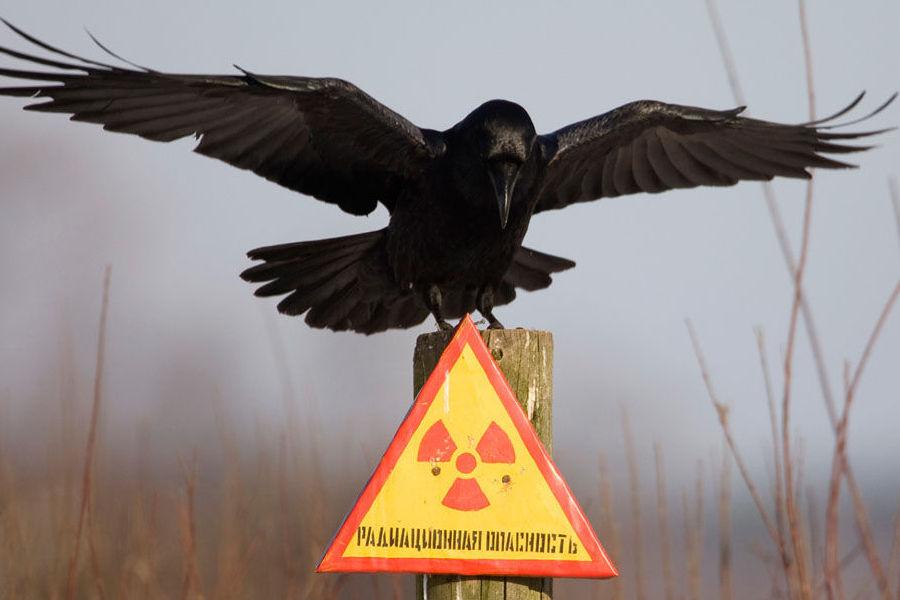 Избегайте радиации