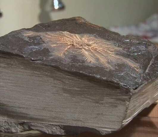 Камень размером 10-15 см