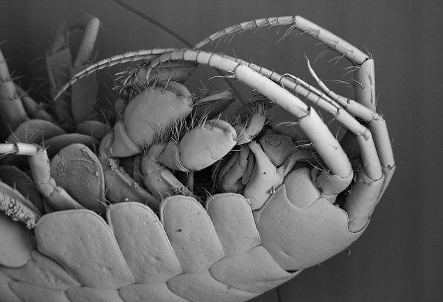Креветка поедает планктон