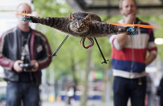 Теперь кот полетит на выставку