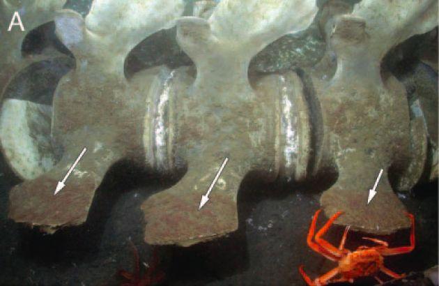 Черви питаются костями китов