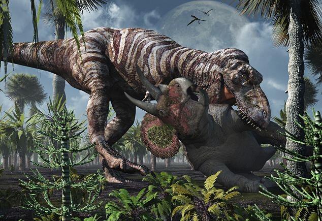 Тираннозавр отрывал голову трицераптосам