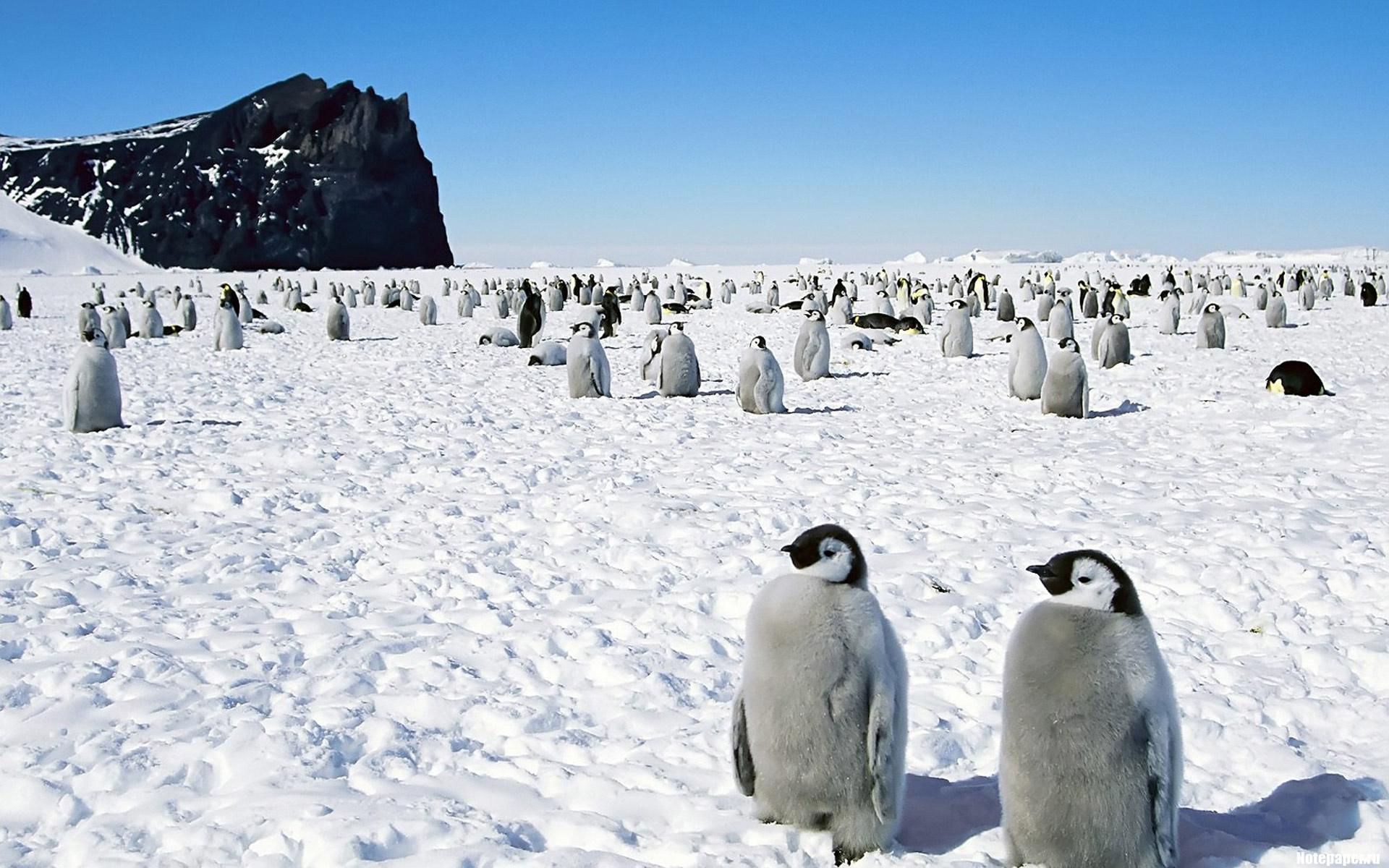 От глобального потепления пострадают не только животные Антарктиды