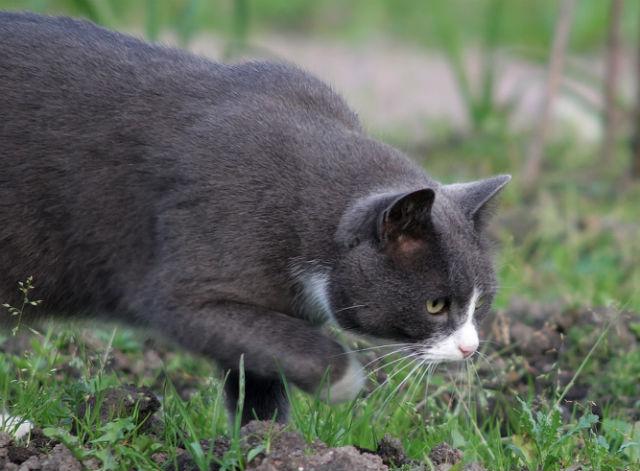 Кошки сами выбрали людей, чтобы жить рядом