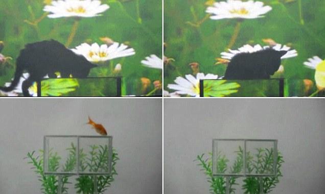 Новая технология заставила исчезнуть кошку и рыбку