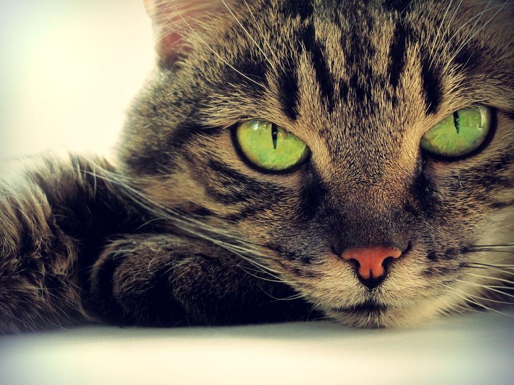 Коты переносят паразитов, доводящих людей до самоубийства