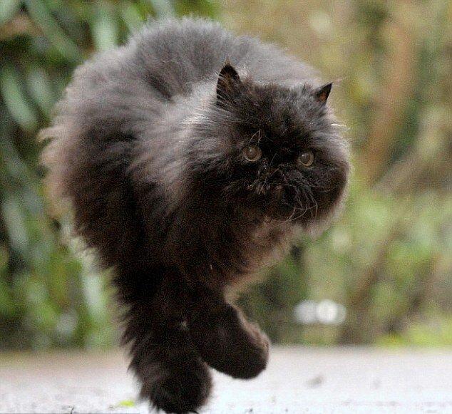 Коту не оставляли шансов