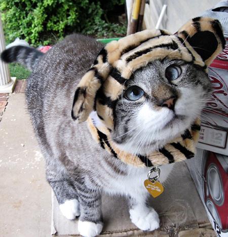 Косоглазый котик