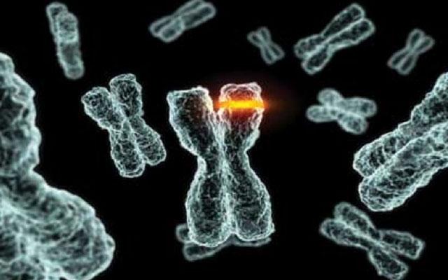 Некодирующая ДНК человека