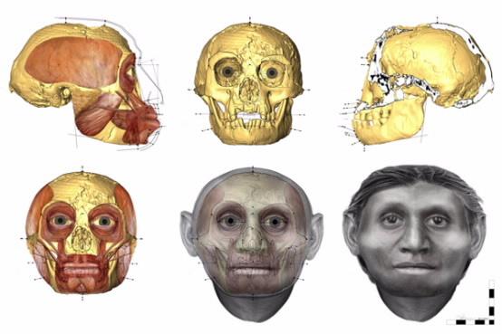 Реконструкция черепа
