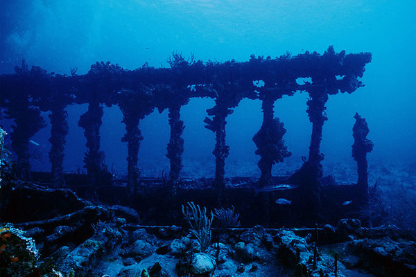 Рона - любимый корабль исследователей подводного мира