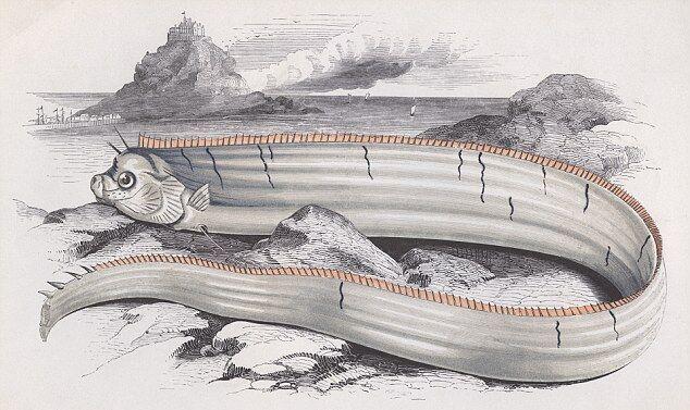 Одно из первых описаний рыбы