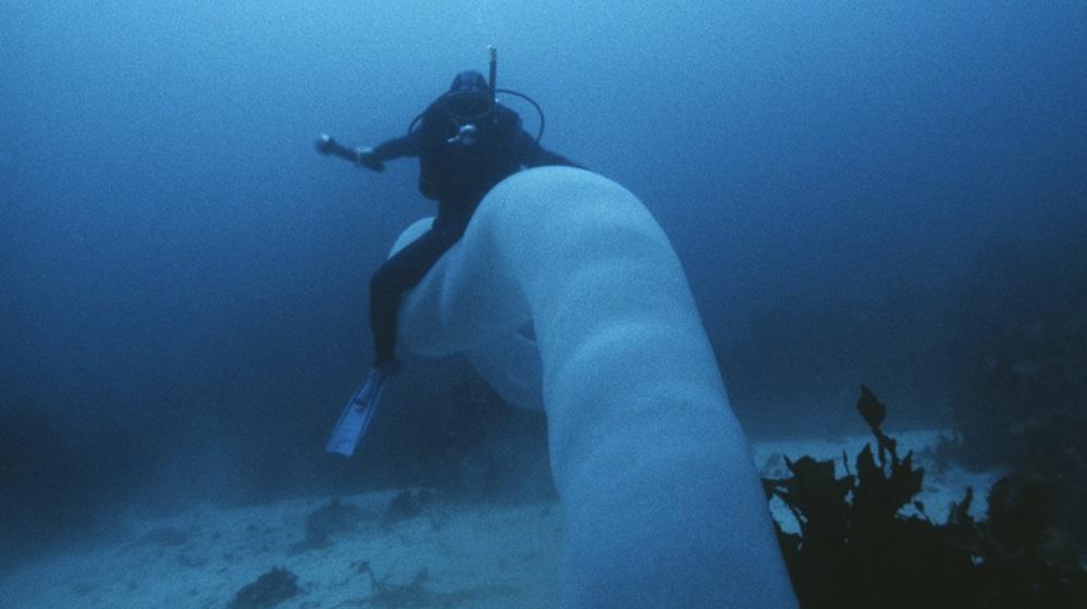Морского единорога можно оседлать