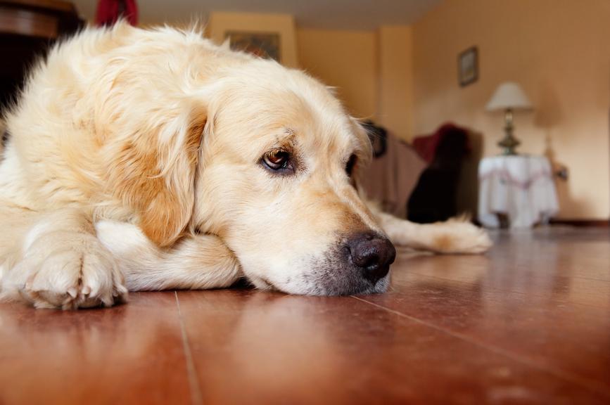 Собак обвинили в распространении рака у людей