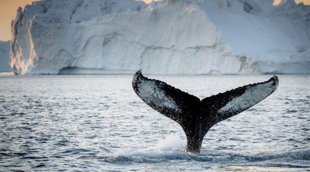Большинство территорий Гренландии до сих пор остаются неисследованными