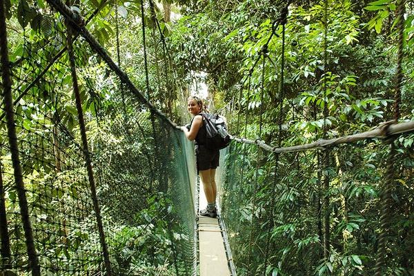 Всматриваться в природу джунглей на Борнео можно вечно