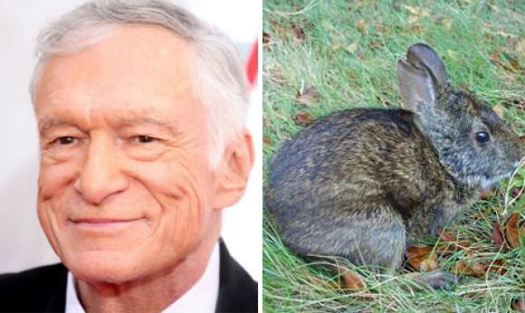 Кролик Хью Хеффнера