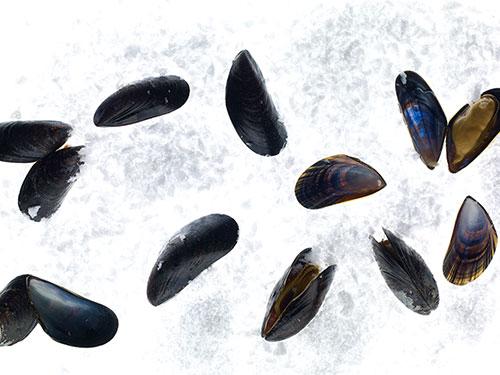 Моллюски нейтрализуют вред сахара