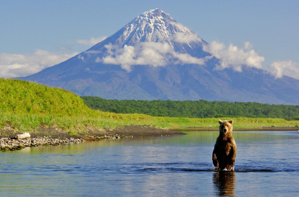 Камчатка — уголок, где можно посидеть в компании бурых медведей