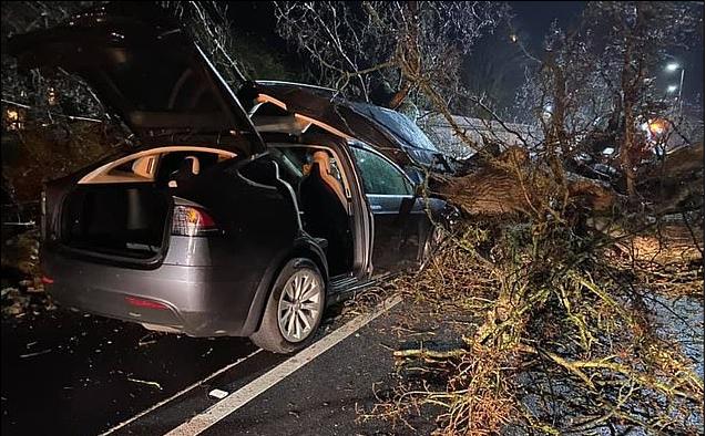 Автопилот Tesla Model X применил экстренное торможение и увернулся от падения дерева на крышу салона