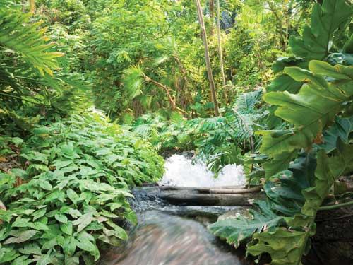 254 километра непроходимых джунглей - отличный повод отвлечься