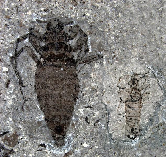 Слева — самка, справа — самец