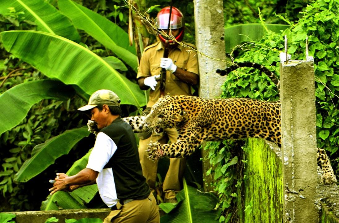 ТОП-10 лучших фото живой природы