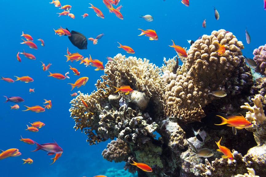 Рыбы к 2050 году станут меньше почти на четверть