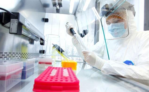 Анализы ДНК костных останков положили конец прениям