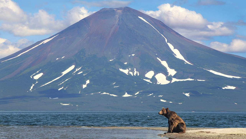 Камчатка может похвастаться нетронутой природой и обилием медведей