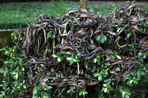 Змеиный остров Бразилии — приют для 4 тысяч видов ядовитых змей