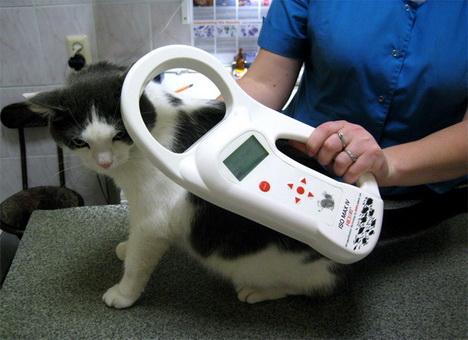 Чипизация животных