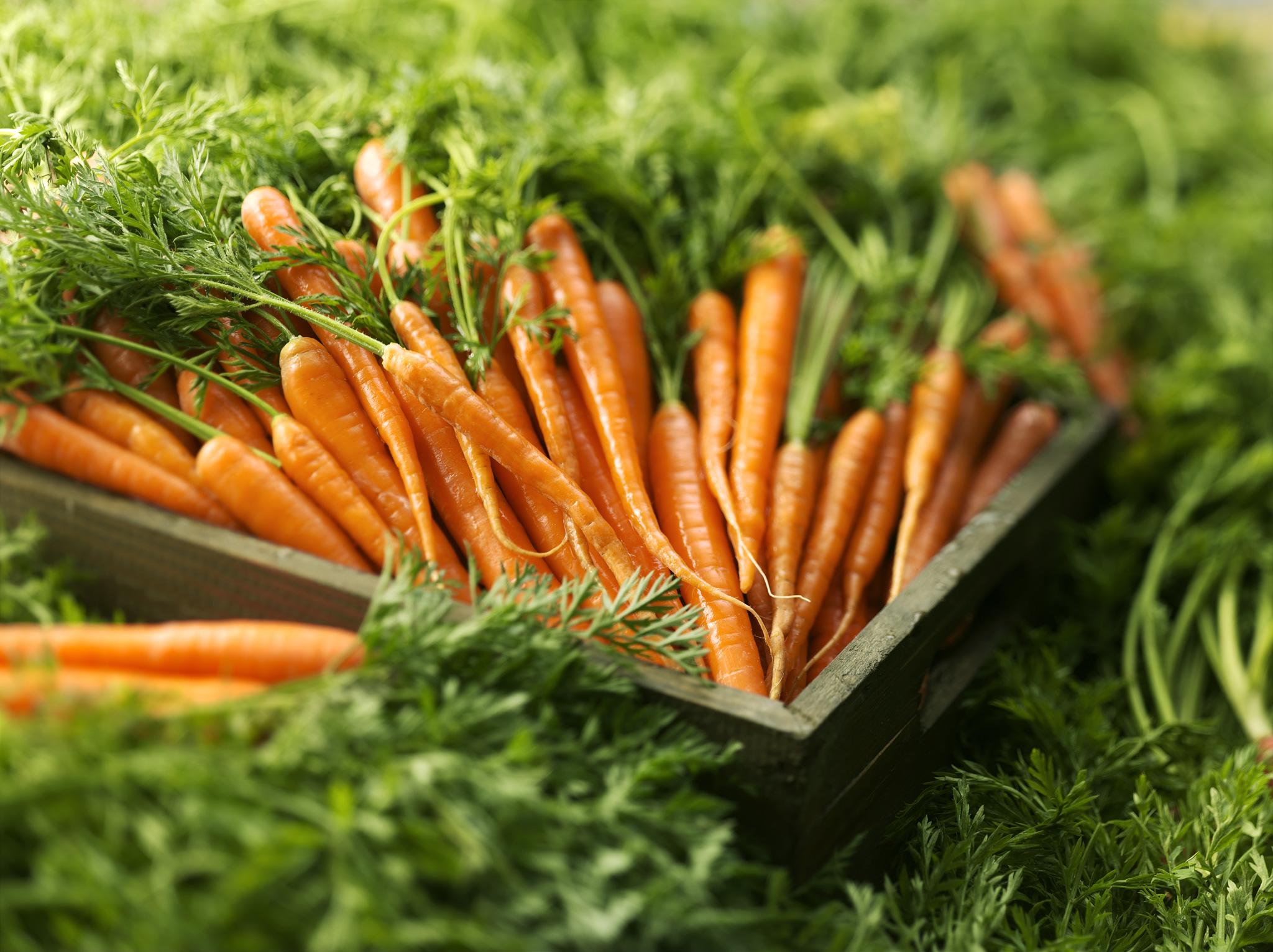 За счет клетчатки морковь надолго дарит чувство сытости