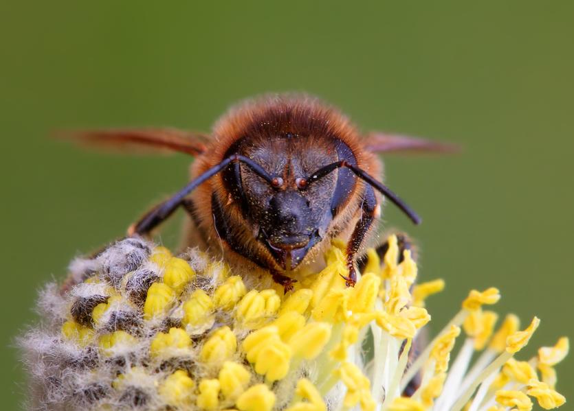 Пчелы тоже любят кофеин