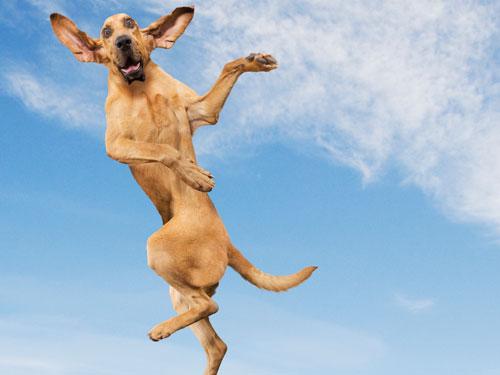 Владельцы домашних животных менее подвержены депрессии