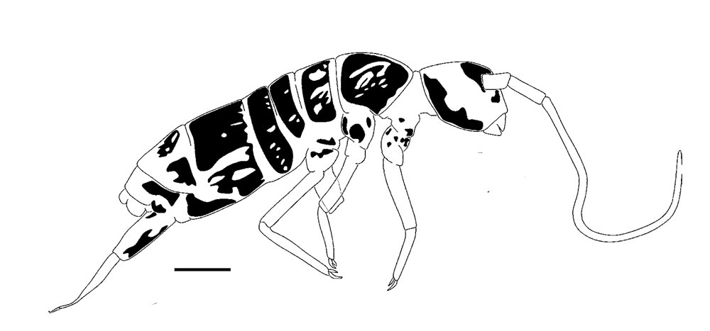 Рисунок безглазого насекомого